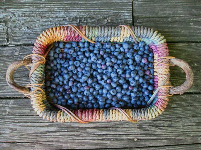 Basket of Fresh Picked Blueberries