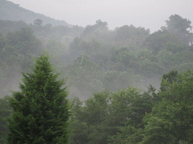 Gentle Rain and A Misty Morning