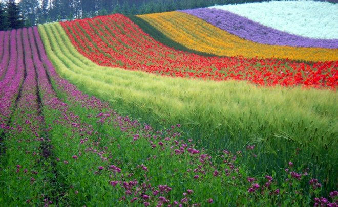 fields of flowers