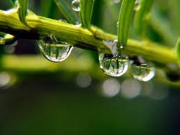 raindrops on leaves 3