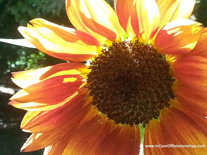 Sunflower -- with text