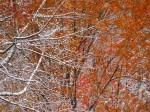 autumn-winter 2
