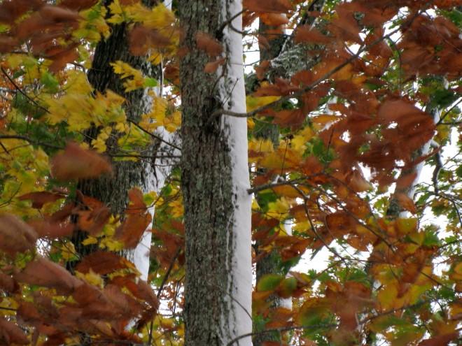 autumn-winter 4
